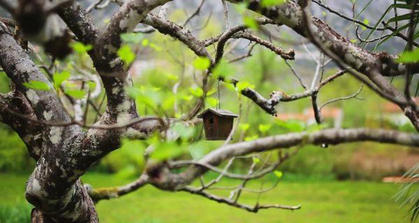 Bringing Birds To Your Landscape