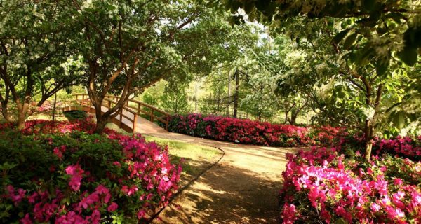 The Ins And Outs Of Shade Gardening